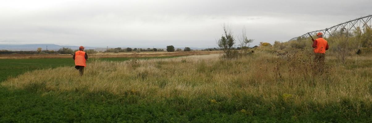 Corporate Pheasant Hunting at Pleasant Valley