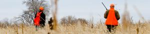Utah Pheasant Hunting Pictures