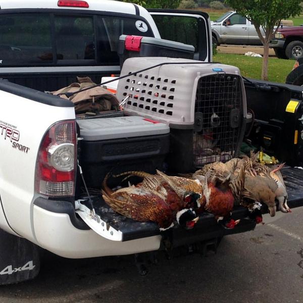 Utah Bird Hunting